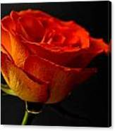 Orange Rose Canvas Print
