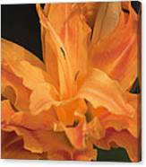 Orange Ruffles Canvas Print