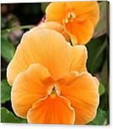 Orange Sickle Pansies Canvas Print