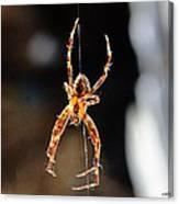 Orange Spider Canvas Print
