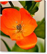 Orange Star   Canvas Print