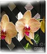 Orange Striped Orchids Canvas Print