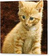 Orange Tabby Mixed Breed Kitten  Canvas Print