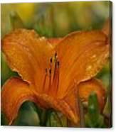 Orange Uglad Canvas Print