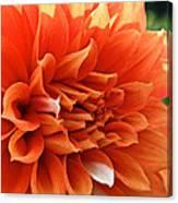 Orange Vanilla Dahlia Canvas Print