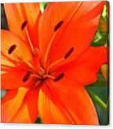 Oranges Poranges Canvas Print
