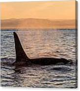 Orca At Sunset Canvas Print