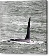 Orca On The Move Canvas Print