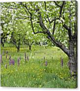 Orchard With Flowering Orchids Canvas Print