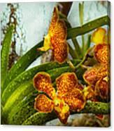 Orchid - Oncidium - Ripened   Canvas Print