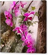 Orchid - Tropical Passion Canvas Print