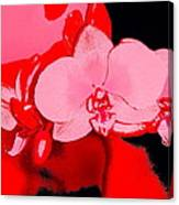 Orchid 3 Canvas Print