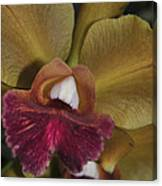 Orchid 85 Canvas Print