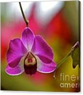 Orchid And Bud Canvas Print