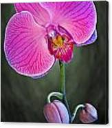 Orchid And Buds Canvas Print