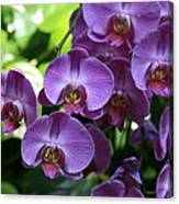 Orchid Beauties Canvas Print