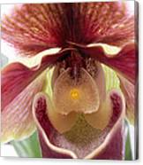 Orchid Interior Canvas Print