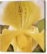 Orchid Flower Canvas Print