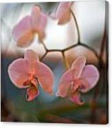 Orchid Gathering Canvas Print