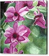 Orchid In The Shadows Canvas Print