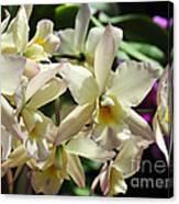 Orchid Iwanagara 9854 Canvas Print