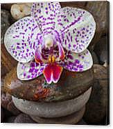 Orchid On Stack Of Rocks Canvas Print
