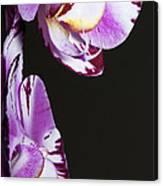 Orchid Stem Canvas Print