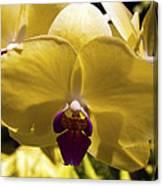 Orchid Study Vi Canvas Print