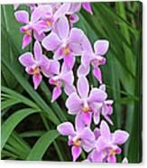 Orchids 15 Canvas Print