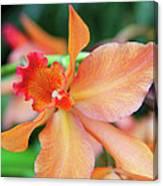 Orchids 25 Canvas Print