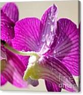Orchids And Raindrops Canvas Print