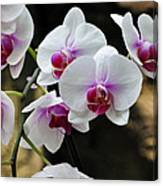 Orchids For Your Day Canvas Print