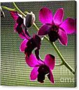 Orchids In The Sunlight Canvas Print