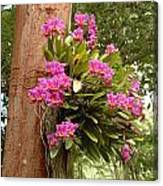 Orchids On Tree Canvas Print