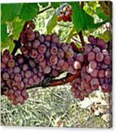 Oregon Burgundy Canvas Print