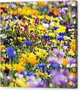 Oregon Wildflowers Canvas Print