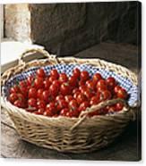 Organic Cherry Tomatoes Canvas Print