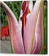 Oriental Lily Named La Mancha Canvas Print