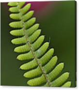 Ornamental Fern Canvas Print