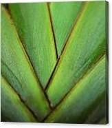 Ornamental Palm Detail Canvas Print