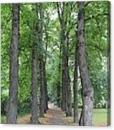 Oslo Trees Canvas Print