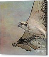 Osprey And Fish Canvas Print