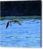 Osprey Environmentalist Canvas Print