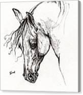 Ostragon Polish Arabian Horse 1 Canvas Print