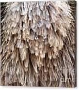 Ostrich Fluff Canvas Print