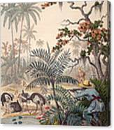 Ostrich Hunting, 1853 Canvas Print