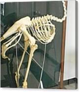 Ostrich Skeleton Canvas Print