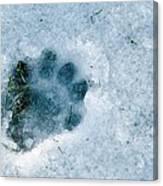 Otter Footprint In Snow Canvas Print