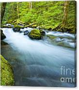 Out Of The Rainforest Canvas Print