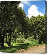 Out On A Country Road Canvas Print